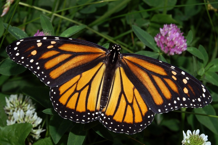Wholesalers and Butterflies
