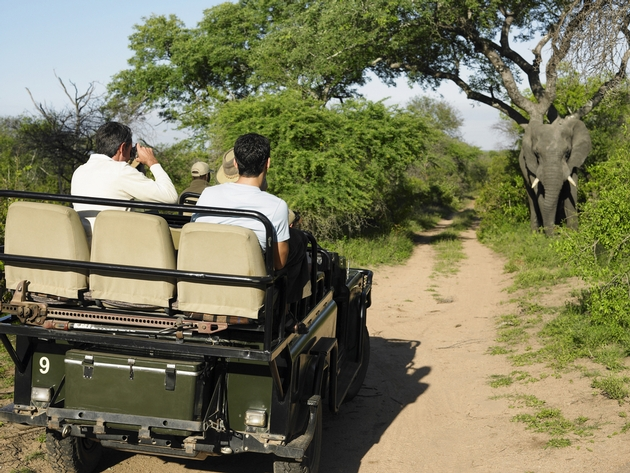 Wildlife Tourism Needs Greater Focus