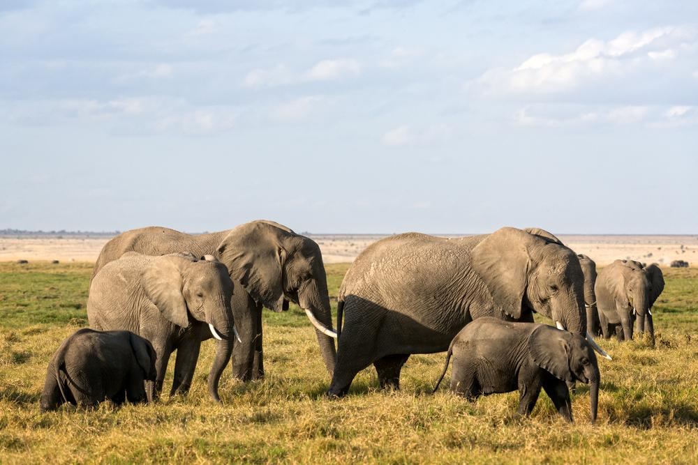 Kenya keen on conservation
