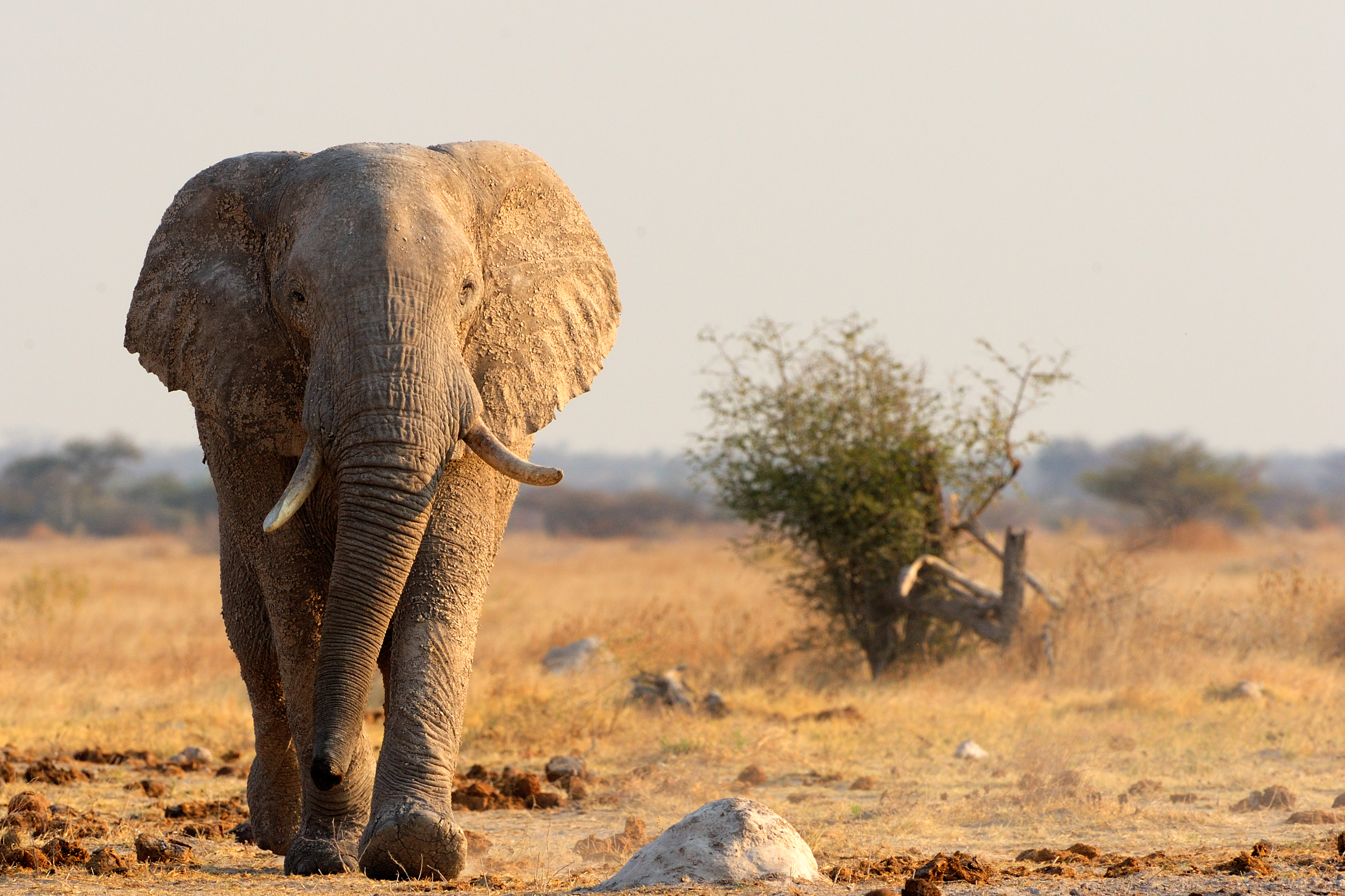 The future of elephants is in our hands