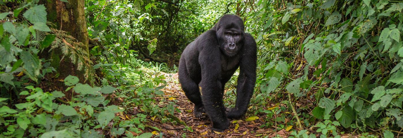 People and Gorillas at Bwindi