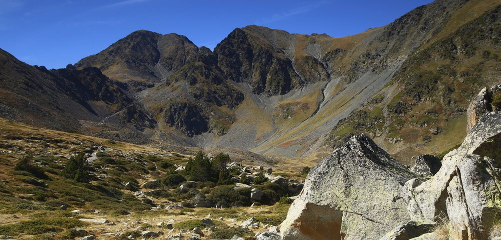 Purely Pyrenees walks tall after successful launch