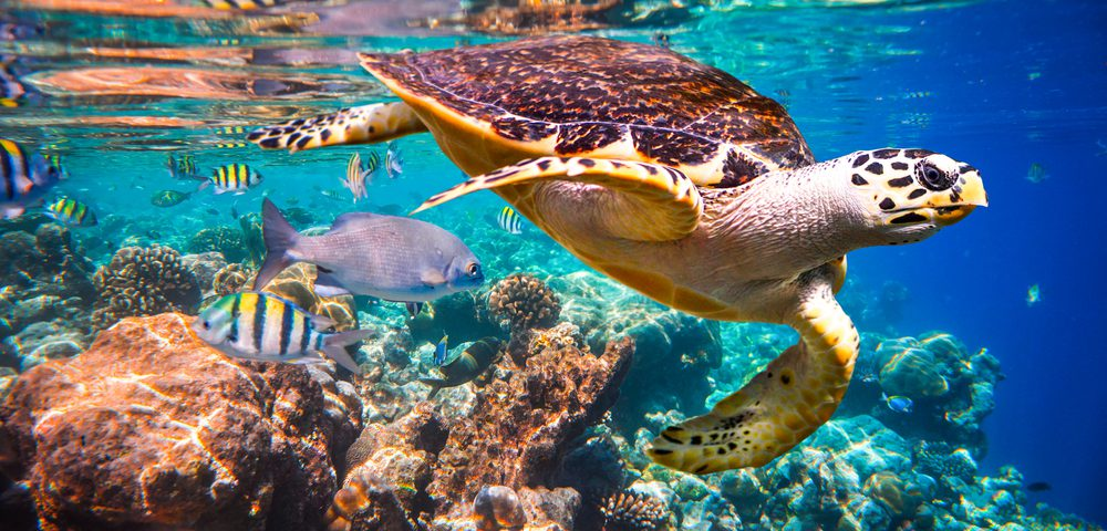 New Hotel Opens On Maldives Biosphere Reserve