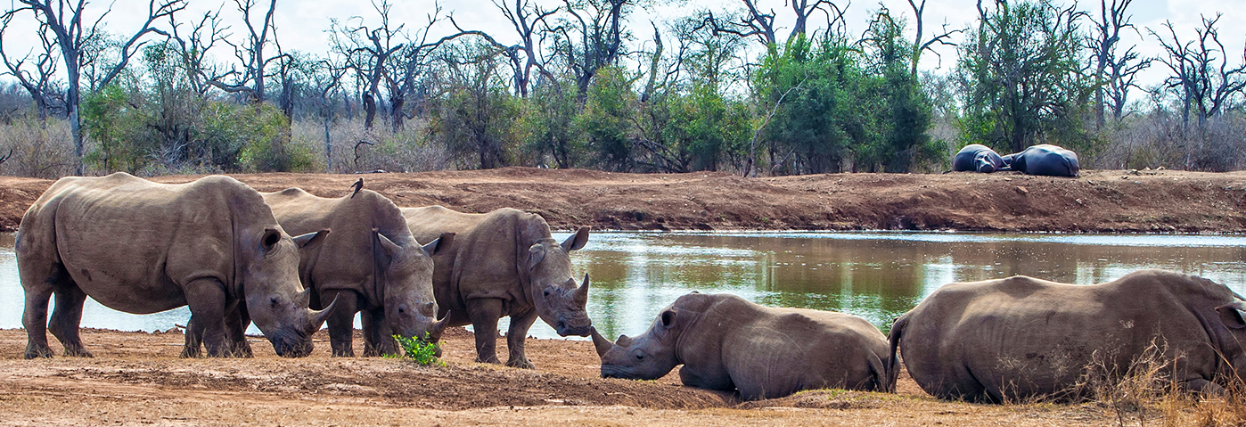 Saving the Rhino – a worthy campaign close to all our hearts