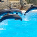 Turismo com animais aquáticos: a maré está mudando