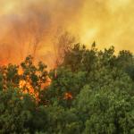 Incêndios na Amazônia: como a indústria de viagens e turismo agiu para ajudar e para efetuar mudanças?
