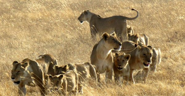 GOING WILD FOR TANZANIA'S WILDLIFE