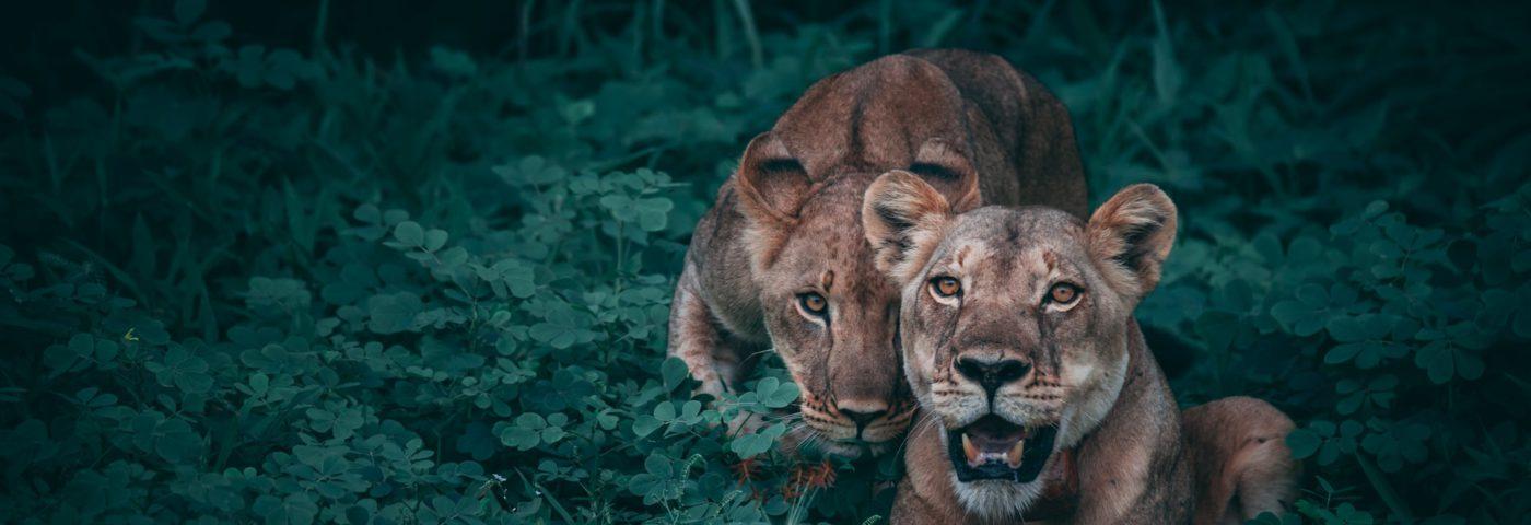 10 Best Africa Wildlife Documentaries