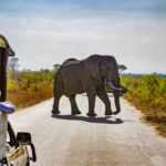 The Pandemic and Tourism in Africa