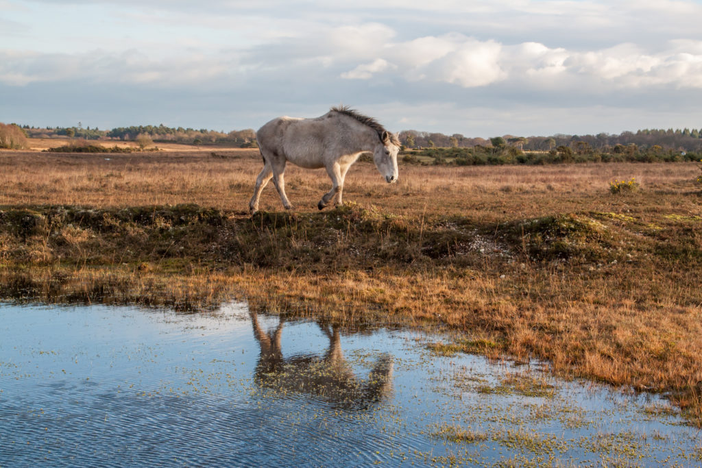 New Forest, Hampshire, England