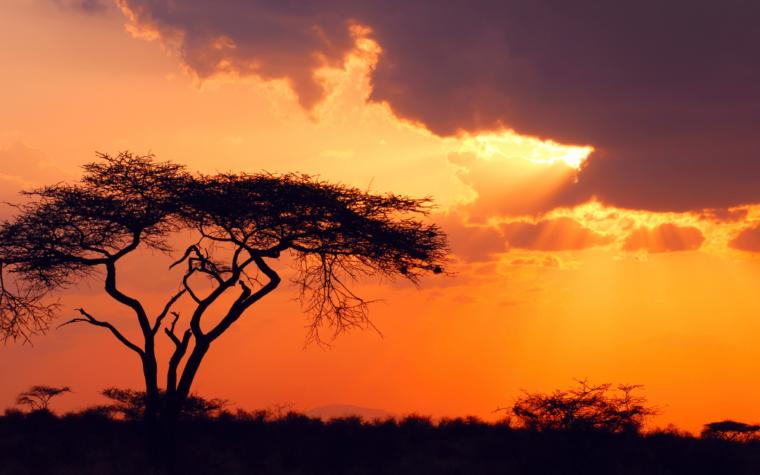 Africa stories
