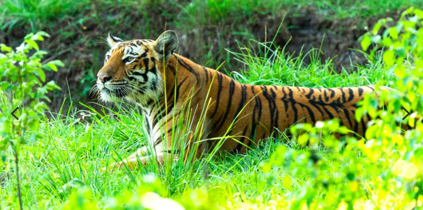 Discover The Wonders Of Madhya Pradesh's Wildlife At World Travel Market 2021